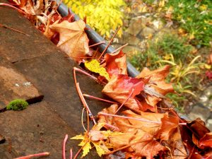 leaves stuck in a gutter that could benefit from gutter guard